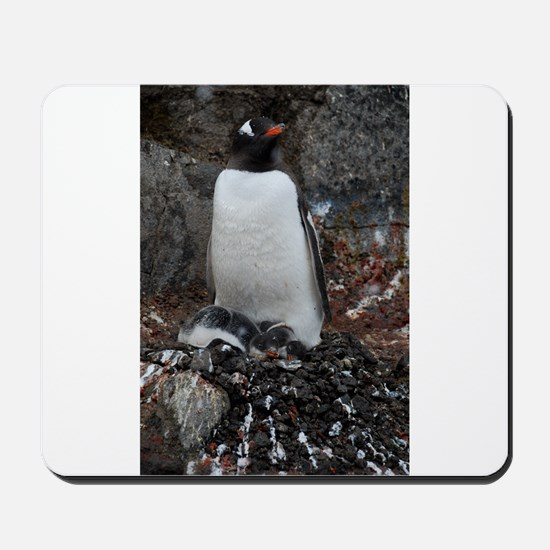 Gentoo Penguin at Port Lockroy Mousepad
