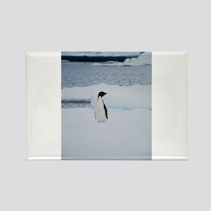 Adelie Penguin in Antarctica Rectangle Magnet