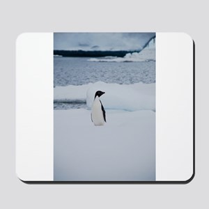Adelie Penguin in Antarctica Mousepad