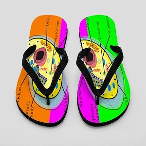ff biology teacher 2 Flip Flops