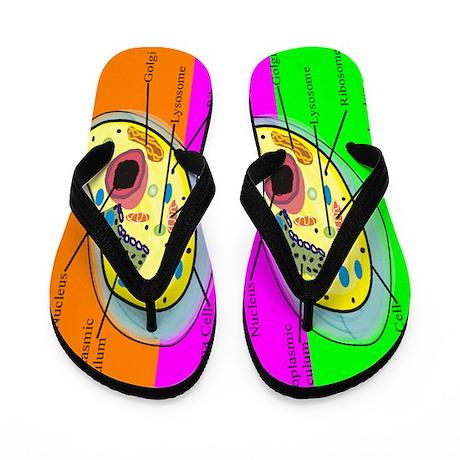 ff biology teacher 2.PNG Flip Flops