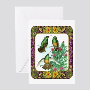 Buff Bellied Hummingbirds Greeting Card