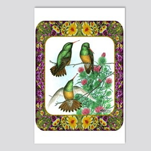 Buff Bellied Hummingbirds Postcards (Package of 8)