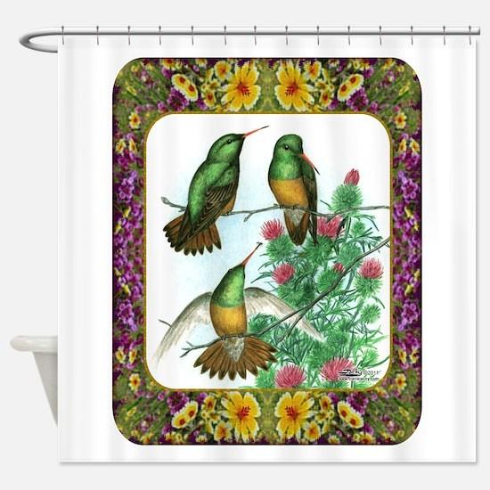 Buff Bellied Hummingbirds Shower Curtain