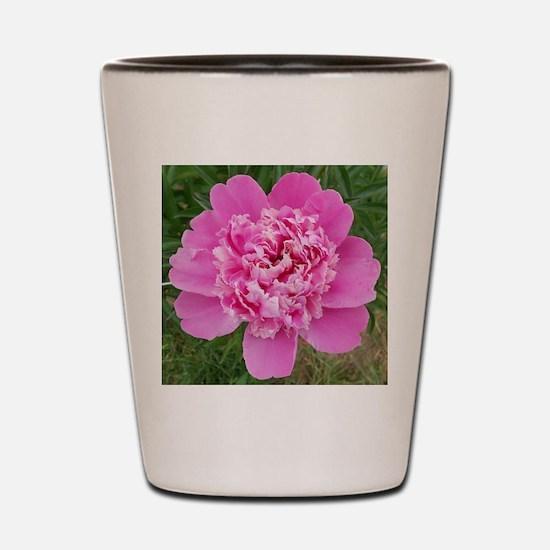 Pink Peonie Shot Glass