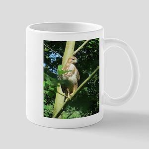 sparrowhawk Mugs