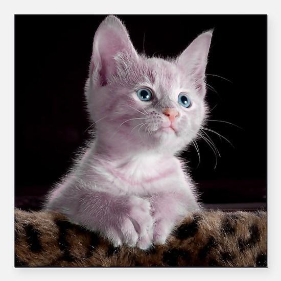 """Unique Cute kitten Square Car Magnet 3"""" x 3"""""""