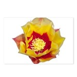 Prickly Pear Flower Postcards (Package of 8)