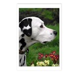...Dalmatian 04... Postcards (Package of 8)