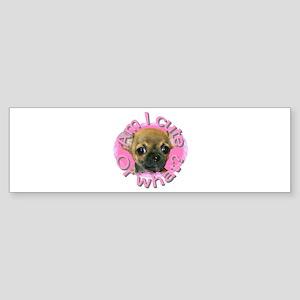Chihuahua (Short Hair) Bumper Sticker