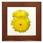 2 YELLOW BARREL CACTUS FLOWERS Framed Tile