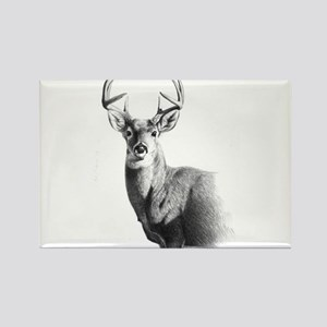 Whitetail Rectangle Magnet