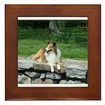 Shelties Rule! Framed Tile