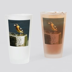 Pretty Black Headed Grosbeak Drinking Glass
