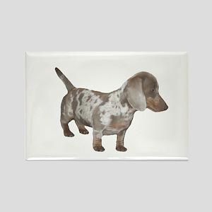 Speckled Dachshund Dog Rectangle Magnet