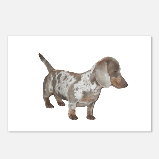 Speckled Dachshund Dog Postcards (Package of 8)