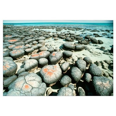 Stromatolites Poster