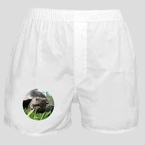 Helaine's Desert Tortoise Boxer Shorts