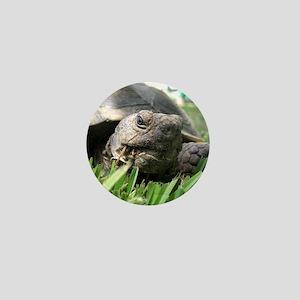 Helaine's Desert Tortoise Mini Button