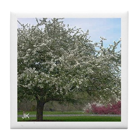 A Tree Blossoming in Spring