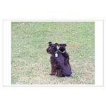 Black Schnauzer Puppy Love Large Poster