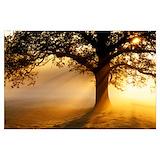 Oak tree sunrise Posters