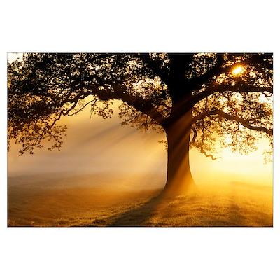 Oak tree at sunrise Poster