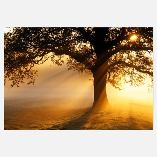 Oak tree at sunrise