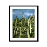 Many Saguaros In Az Framed Panel Print