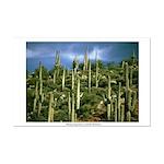 Many Saguaros In Az Mini Poster Print