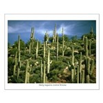 Many Saguaros In Az Small Poster