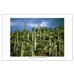 Many Saguaros In Az Large Poster
