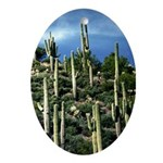 Many Saguaros In Az Ornament (Oval)