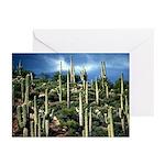 Many Saguaros In Az Greeting Cards (Pk of 20)