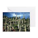 Many Saguaros In Az Greeting Card