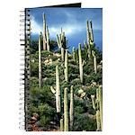 Many Saguaros In Az Journal