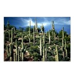 Many Saguaros In Az Postcards (Package of 8)