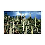 Many Saguaros In Az 35x21 Wall Decal