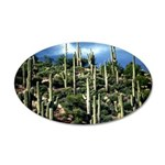 Many Saguaros In Az 20x12 Oval Wall Decal