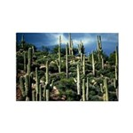 Many Saguaros In Az Rectangle Magnet (10 pack)