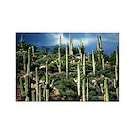 Many Saguaros In Az Rectangle Magnet