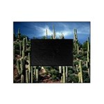 Many Saguaros In Az Picture Frame