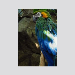 Epic Macaw Rectangle Magnet
