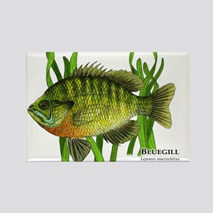 Bluegill Rectangle Magnet