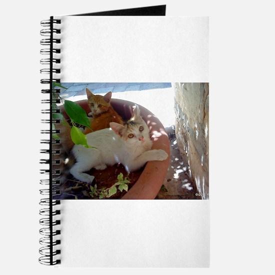 Givat Shaul Cat 77 Journal