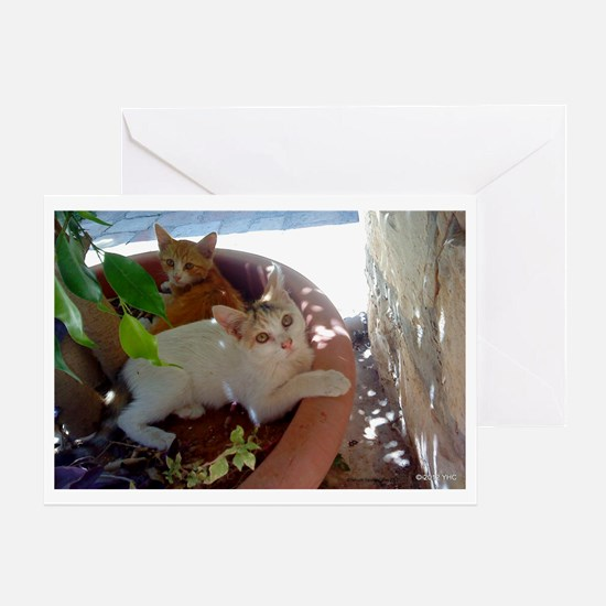 Givat Shaul Cat 77 Greeting Card