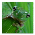 Frog Square Car Magnet 3