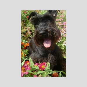 Black Miniature Schnauzer Rectangle Magnet