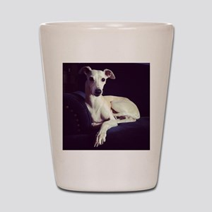 The Whippet Is In Shot Glass