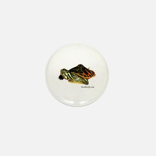 Hatchling Map Turtle Mini Button